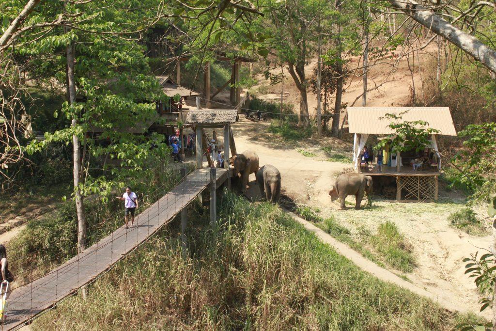 Bridge to cross to the Lodge